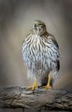 Birds from the I-20 Wildlife Preserve in Midland Texas.
