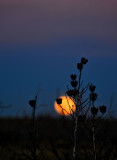 Moon rising (Sibley Nature Center)