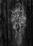 The Scream as reproduced by nature and a saw mill.