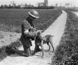 10 May 1918 - Reading message brought by messenger dog