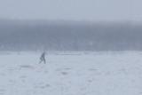 Man walking towards Moosonee on the Moose River 2013 November 30th.