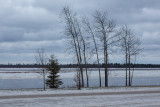 Trees along the Moose River on a cloudy morning 2015 November 30th.