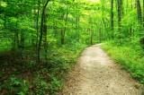 *Scenic Shot, Lost Trail