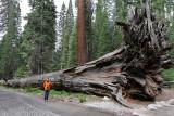 7129 West USA road trip - IMG_2422_DxO Pbase.jpg