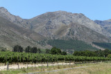 Two weeks in South Africa - Discovering the wine area, Stellenbosch and Franschoek