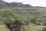 1242 Two weeks in South Africa - IMG_3647 DxO Pbase.jpg