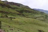 1255 Two weeks in South Africa - IMG_3660 DxO Pbase.jpg