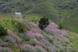 1365 Two weeks in South Africa - MK3_2356 DxO Pbase.jpg