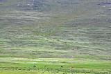 1403 Two weeks in South Africa - MK3_2368 DxO Pbase.jpg