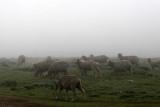 1512 Two weeks in South Africa - MK3_2428 DxO Pbase.jpg