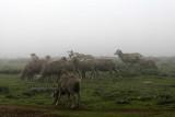 1514 Two weeks in South Africa - MK3_2430 DxO Pbase.jpg