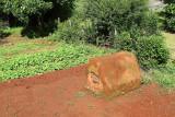 4235 Two weeks in South Africa - MK3_3192_DxO Pbase.jpg