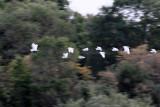 4884 Two weeks in South Africa - IMG_6420_DxO Pbase.jpg