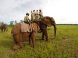 On a elephant back in a Zimbabwe reserve - Balade à dos d'éléphant dans une réserve