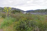119 Une semaine en Corse du sud - A week in south Corsica -  IMG_7996_DxO Pbase.jpg