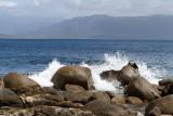 46 Une semaine en Corse du sud - A week in south Corsica -  IMG_7923_DxO Pbase.jpg