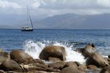 49 Une semaine en Corse du sud - A week in south Corsica -  IMG_7926_DxO Pbase.jpg