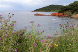 149 Une semaine en Corse du sud - A week in south Corsica -  IMG_8026_DxO Pbase.jpg