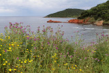 150 Une semaine en Corse du sud - A week in south Corsica -  IMG_8027_DxO Pbase.jpg