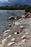 344 Une semaine en Corse du sud - A week in south Corsica -  IMG_8221_DxO Pbase.jpg