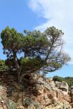 348 Une semaine en Corse du sud - A week in south Corsica -  IMG_8225_DxO Pbase.jpg