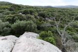 368 Une semaine en Corse du sud - A week in south Corsica -  IMG_8245_DxO Pbase.jpg