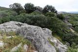 373 Une semaine en Corse du sud - A week in south Corsica -  IMG_8250_DxO Pbase.jpg