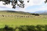 405 Une semaine en Corse du sud - A week in south Corsica -  IMG_8282_DxO Pbase.jpg