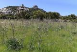 417 Une semaine en Corse du sud - A week in south Corsica -  IMG_8294_DxO Pbase.jpg