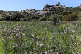 424 Une semaine en Corse du sud - A week in south Corsica -  IMG_8301_DxO Pbase.jpg