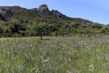 432 Une semaine en Corse du sud - A week in south Corsica -  IMG_8309_DxO Pbase.jpg