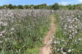 438 Une semaine en Corse du sud - A week in south Corsica -  IMG_8315_DxO Pbase.jpg
