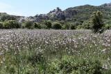 439 Une semaine en Corse du sud - A week in south Corsica -  IMG_8316_DxO Pbase.jpg