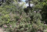 445 Une semaine en Corse du sud - A week in south Corsica -  IMG_8322_DxO Pbase.jpg