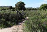 479 Une semaine en Corse du sud - A week in south Corsica -  IMG_8356_DxO Pbase.jpg