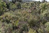 481 Une semaine en Corse du sud - A week in south Corsica -  IMG_8358_DxO Pbase.jpg