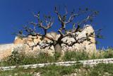 503 Une semaine en Corse du sud - A week in south Corsica -  IMG_8380_DxO Pbase.jpg