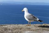 532 Une semaine en Corse du sud - A week in south Corsica -  IMG_8409_DxO Pbase.jpg