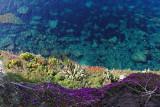 562 Une semaine en Corse du sud - A week in south Corsica -  IMG_8439_DxO Pbase.jpg