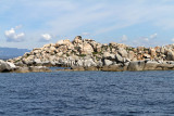683 Une semaine en Corse du sud - A week in south Corsica -  IMG_8560_DxO Pbase.jpg