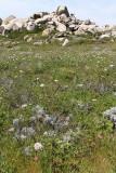 709 Une semaine en Corse du sud - A week in south Corsica -  IMG_8586_DxO Pbase.jpg