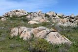 713 Une semaine en Corse du sud - A week in south Corsica -  IMG_8590_DxO Pbase.jpg