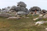 733 Une semaine en Corse du sud - A week in south Corsica -  IMG_8610_DxO Pbase.jpg