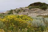 877 Une semaine en Corse du sud - A week in south Corsica -  IMG_8756_DxO Pbase.jpg