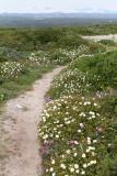 905 Une semaine en Corse du sud - A week in south Corsica -  IMG_8784_DxO Pbase.jpg