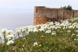 986 Une semaine en Corse du sud - A week in south Corsica -  IMG_8865_DxO Pbase.jpg