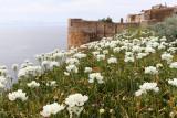 987 Une semaine en Corse du sud - A week in south Corsica -  IMG_8866_DxO Pbase.jpg
