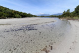 1187 Une semaine en Corse du sud - A week in south Corsica -  IMG_9085_DxO Pbase.jpg