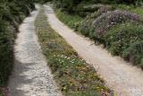 1281 Une semaine en Corse du sud - A week in south Corsica -  IMG_9183_DxO Pbase.jpg