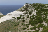 1308 Une semaine en Corse du sud - A week in south Corsica -  IMG_9210_DxO Pbase.jpg